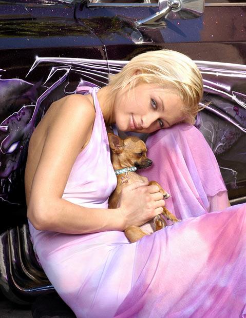 Paris Hilton và bé chó chihuahua Tinkerbelle của cô