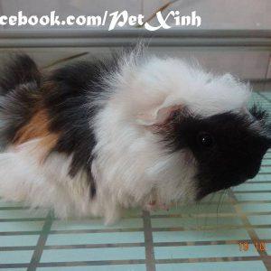 PetXinh - shop thú cưng uy tín Gò Vấp, Tp.HCM 47