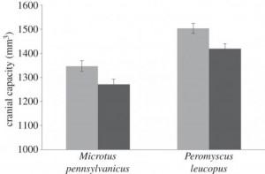 Biểu đồ so sánh kích thước họp sọ của động vật ở nông thôn (màu xám) và ở thành thị (màu trắng xám) của hai loài chuột đồng (Microtus pennsylvanicus) và chuột chân trắng (Peromyscus leucopus).