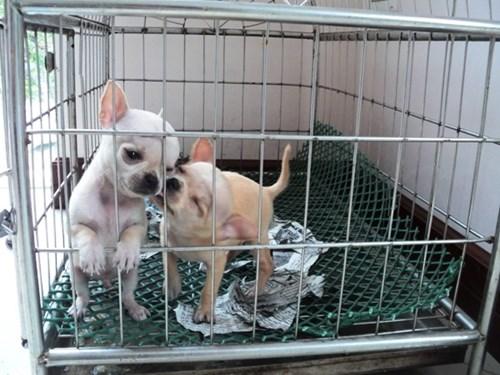 Các bé thú cưng được chăm sóc kỹ lưỡng tại các cơ sở trông giữ