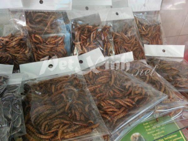 superworm thức ăn cho nhím kiểng