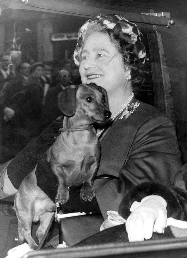 Nữ hoàng nước anh Victoria và chú chó dachshund