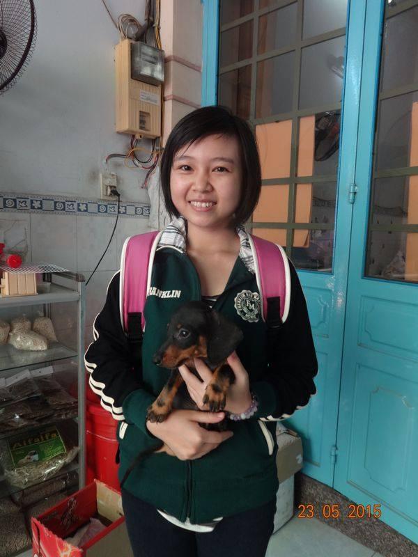 Chó dachshund lạp xưởng giá rẻ Tp.HCM gò vấp