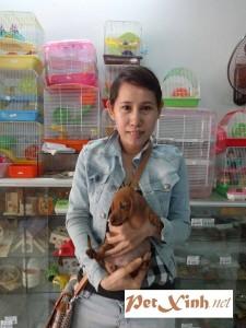 Khách hàng mua lạp xưởng chó Dachshund