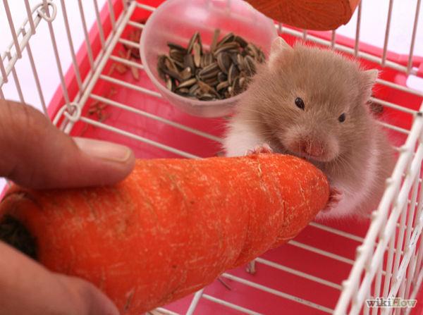 bổ sung dinh dưỡng cho hamster
