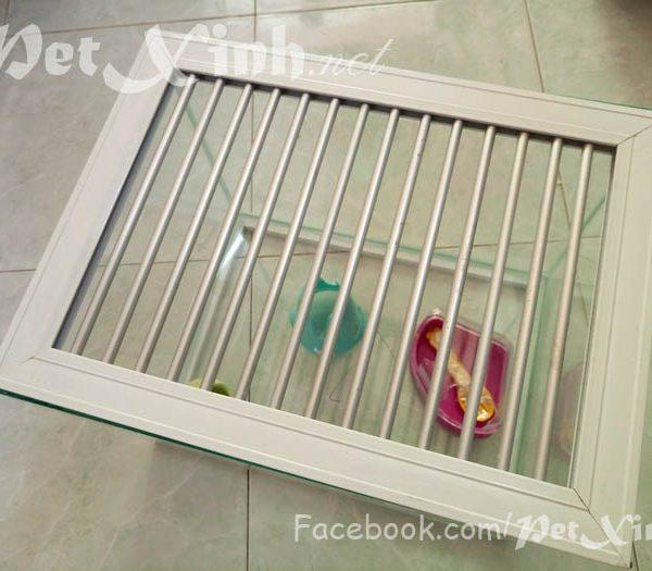 Hồ kiếng nuôi nhím hamster
