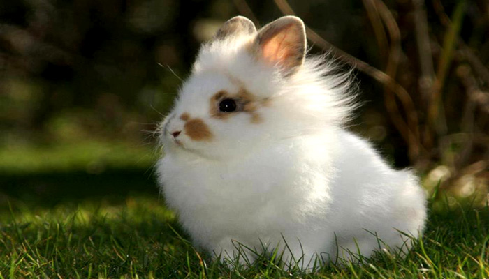 Những điều cần biết khi nuôi thỏ kiểng mini 1