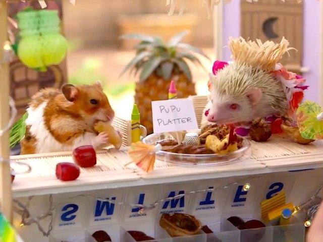 hamster hedgehog party