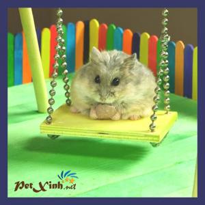 hamster petxinh