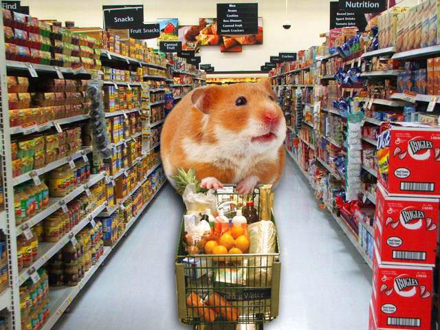 chuẩn bị gì khi nuôi hamster