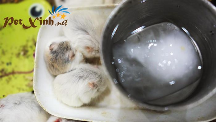 giải nhiệt cho hamster