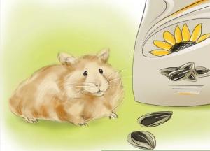 Cách huấn luyện hamster chạy đến bên bạn khi bạn gọi chúng 3