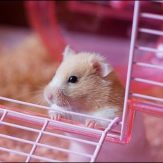 chọn chuồng cho hamster