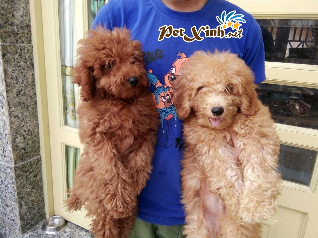Những bé thú cưng đang có mặt tại PetXinh đợt hàng tháng 10/2017 1