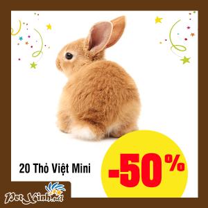 thỏ mini petxinh tân phú