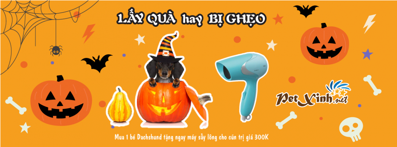 Halloween ghé PetXinh rinh quà 1