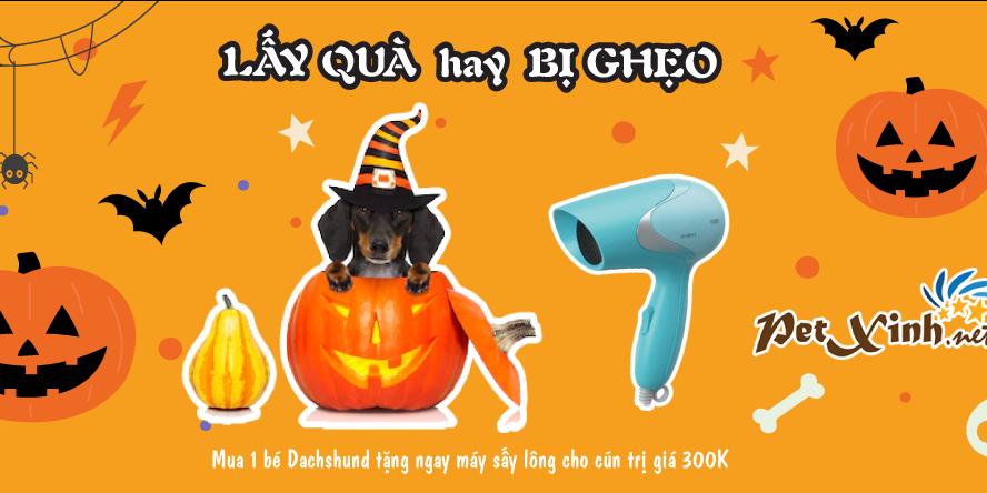Halloween ghé PetXinh rinh quà 3