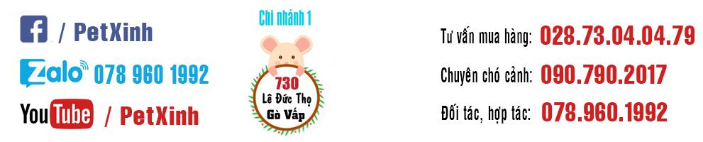 PetXinh - shop thú cưng uy tín Gò Vấp, Tp.HCM 24