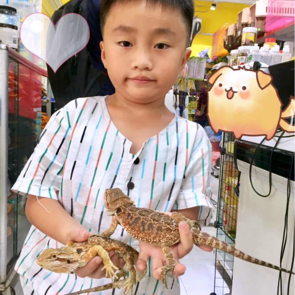 PetXinh - shop thú cưng uy tín Gò Vấp, Tp.HCM 36