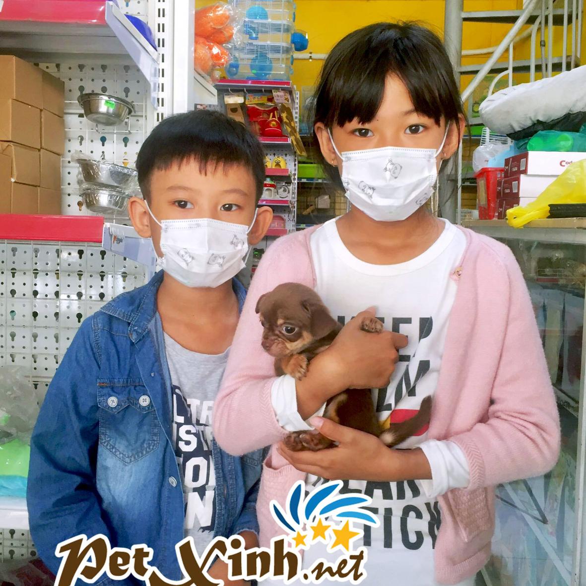 PetXinh - shop thú cưng uy tín Gò Vấp, Tp.HCM 40