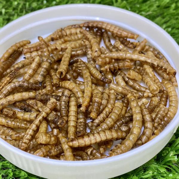 sâu supper worm sâu lớn