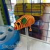 Đĩa bóng xoay chuột lò xo đồ chơi cho mèo