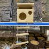 Nhà gỗ treo thang dây