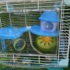 Lồng hamster mica nấm lùn