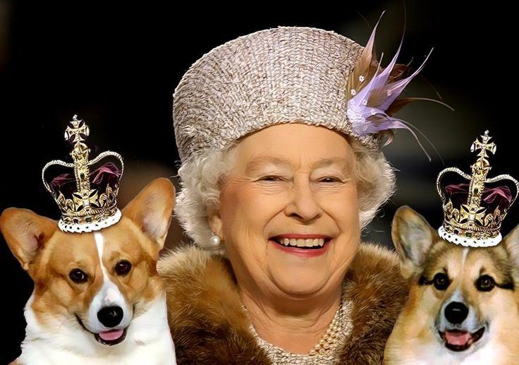chó corgi của nữ hoàng Anh