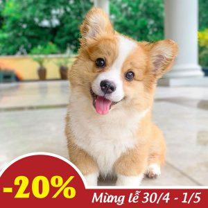 PetXinh - shop thú cưng uy tín Gò Vấp, Tp.HCM 37
