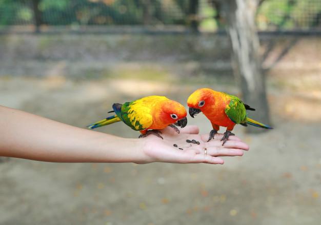 Cho vẹt ăn điều độ