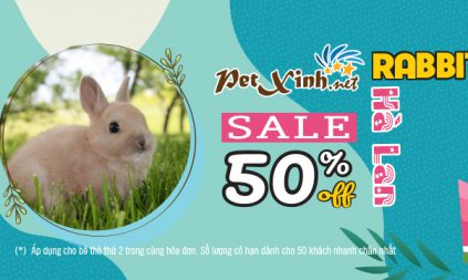 Giảm 50% Thỏ Hà Lan 2