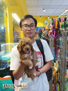 Chó Poodle 10