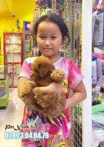 Chó Poodle 12