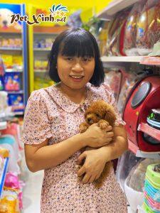 Chó Poodle 6