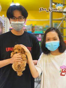 Chó Poodle 7