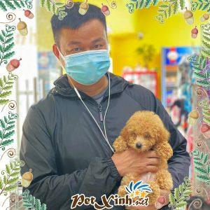 Chó Poodle 14