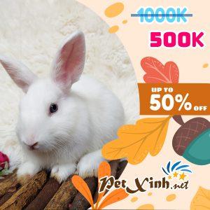 Thỏ Hà Lan Siêu Sale lên tới 50% 7