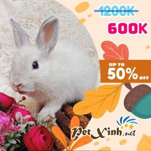 Thỏ Hà Lan Siêu Sale lên tới 50% 11