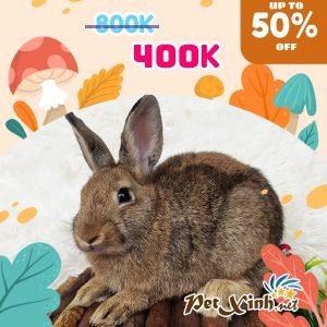 Thỏ Hà Lan Siêu Sale lên tới 50% 3