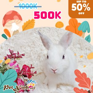 Thỏ Hà Lan Siêu Sale lên tới 50% 10