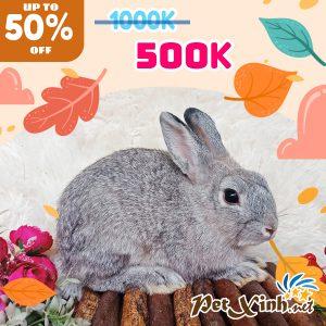 Thỏ Hà Lan Siêu Sale lên tới 50% 4