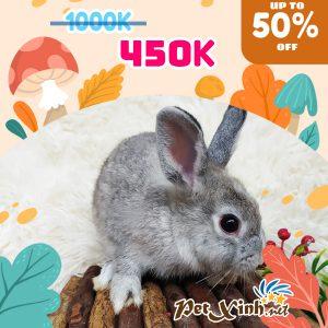 Thỏ Hà Lan Siêu Sale lên tới 50% 5
