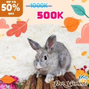 Thỏ Hà Lan Siêu Sale lên tới 50% 2