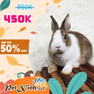 Thỏ Hà Lan Siêu Sale lên tới 50% 1