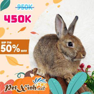 Thỏ Hà Lan Siêu Sale lên tới 50% 9