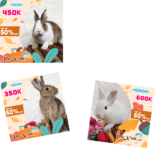 PetXinh - shop thú cưng uy tín Gò Vấp, Tp.HCM 6